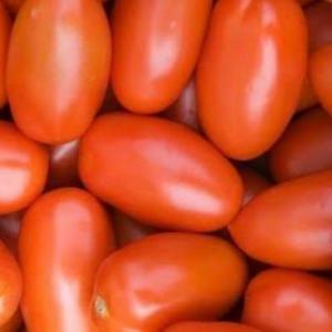 Tomate Italiano orgânico 1 Kg