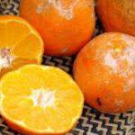 Limão Suco Orgânico 1Kg